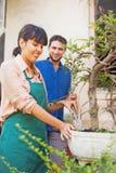 Młode ogrodniczki z bonsai obraz stock