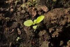 Młode rośliny r w ziemi w naturze i świetle słonecznym obraz royalty free