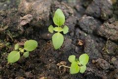 Młode rośliny r w ziemi w naturze i świetle słonecznym obraz stock
