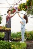 Młode uśmiechnięte kwiaciarnie mężczyzna i kobieta pracuje w szklarni Obrazy Stock