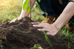 Młodego człowieka klęczenie podczas zasadzać drzewa, zawodu pojęcie Obraz Stock