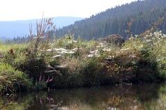 Młodego człowieka połów przy rzeką Obrazy Stock