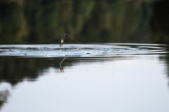 Młodego człowieka połów przy rzeką Zdjęcia Royalty Free