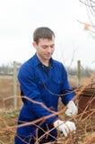 Młodego człowieka winogradu przycina gałąź Fotografia Stock