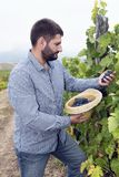 Młodego Człowieka zrywania winogron kapeluszu grona Zdjęcia Stock