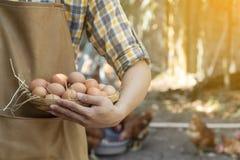 Młodego mądrze średniorolnego odzieży szkockiej kraty długiego rękawa brązu koszulowy fartuch trzyma świeżych kurczaków jajka w k obrazy stock