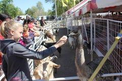 Młodej blond dziewczyny żywieniowy emu fotografia stock