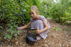 Młodej dziewczyny zrywania czarne jagody 02 fotografia stock