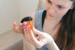 Młodej kobiety karmienie z marchewką i mienie samiec Gromphadorhina portentosa syczący karakan, jeden fotografia stock
