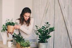 Młodej kobiety podlewania flowerpots w domu Przypadkowe styl życia serie w nowożytnym scandinavian wnętrzu Zdjęcie Stock