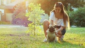 Młodej kobiety uderzanie i chrobota mopsa śliczny pies, bawić się na gazonie w parku przy zmierzchem zbiory