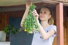Młodej kobiety zrozumienia ziele suszyć Obraz Royalty Free