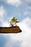 Młodej rośliny dorośnięcie na drzewnym fiszorku Obrazy Stock