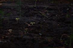 Młodej rośliny dorośnięcie w czarnej bryle pod słońce promieniami obrazy royalty free