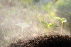 Młodej rośliny growht ziemi deszczu natura Zdjęcia Royalty Free