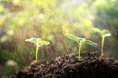 Młodej rośliny growht ziemi deszczu natura Zdjęcia Stock
