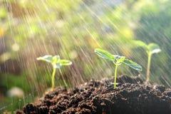 Młodej rośliny growht ziemi deszczu natura Zdjęcie Royalty Free