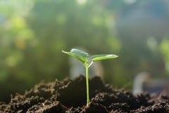 Młodej rośliny growht ziemi natura Obrazy Royalty Free