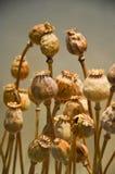 Młodej rośliny nowy życie fotografia royalty free