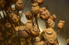Młodej rośliny nowy życie zdjęcie royalty free