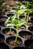 Młodej rośliny nowy życie obrazy royalty free