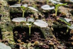Młodej rośliny nowy życie obraz stock