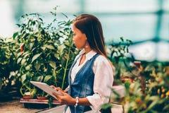 Młody ładny Azjatycki kobieta agronom z pastylką pracuje w szklarni sprawdza rośliny Fotografia Royalty Free