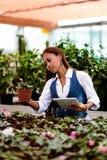 Młody ładny Azjatycki kobieta agronom z pastylką pracuje w szklarni sprawdza rośliny Zdjęcie Royalty Free