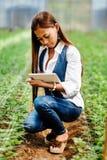 Młody ładny Azjatycki kobieta agronom z pastylką pracuje w szklarni sprawdza rośliny Obraz Stock