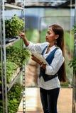 Młody ładny Azjatycki kobieta agronom z pastylką pracuje w szklarni sprawdza rośliny Zdjęcie Stock