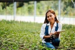 Młody ładny Azjatycki kobieta agronom z pastylką pracuje w szklarni sprawdza rośliny Zdjęcia Stock