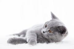 Młody śliczny kot bawić się na białym futerku obraz stock