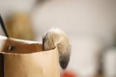 Młody abyssinian kota ogon w torbie na stole obrazy royalty free