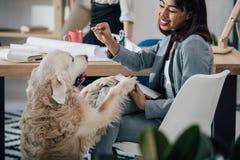 Młody amerykanina afrykańskiego pochodzenia bizneswoman bawić się z golden retriever psem w biurze Zdjęcie Stock