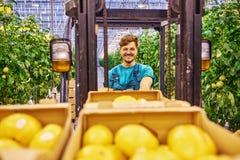 Młody atrakcyjny mężczyzna pracuje na elektrycznym forklift w szklarni Zdjęcie Stock