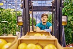 Młody atrakcyjny mężczyzna pracuje na elektrycznym forklift w szklarni Obraz Stock