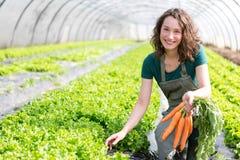 Młody atrakcyjny rolnik zbiera marchewki obrazy stock