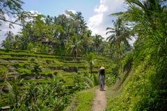 młody atrakcyjny szczęśliwy afro amerykański murzynki 30s rekonesansowy ryż odpowiada las i dżunglę w Bali jest ubranym azjatykci obraz stock