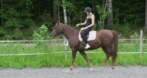 Młody blondynki kobiety jeździec ridning jej arabskiego konia przy gospodarstwem rolnym zbiory wideo