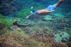 Młody chłopiec snorkel w rafie koralowej mężczyzna dopłynięcia underwater morza tropikalny Snorkeling mężczyzna podwodny zdjęcie royalty free