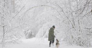 Młody Chiński Czubaty pies Outdoors Na Zielonej trawie Bezwłosy traken pies blisko portret zbiory wideo