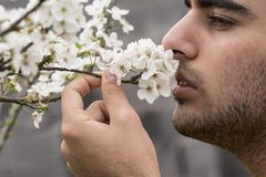 Młody człowiek cieszy się od wiosna czasu śliwkowego drzewa pączkuje zapach Obrazy Royalty Free