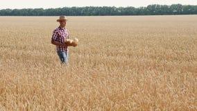 Młody człowiek niesie chleb w koszu na pszenicznym polu zbiory wideo