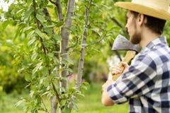 Młody człowiek w rolnym ogrodowym działaniu z cioską i rozcięciem owocowy treeon letni dzień a obraz stock