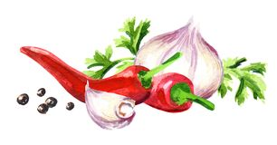 Młody czosnek, cilantro, chili pieprze i peppercorns, Akwareli ręka rysująca ilustracja odizolowywająca na białym tle Zdjęcie Stock