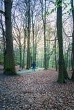 Młody dorosły backpacker przez lasu, Gothenburg, Szwecja obraz royalty free
