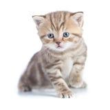 Młody dziecko kota obsiadanie odizolowywający Zdjęcie Stock