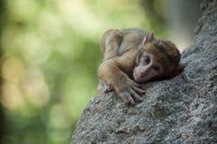 Młody ekspresyjny makak na skale w lesie fotografia stock
