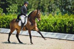 Młody elegancki jeźdza mężczyzna i podpalany koń fotografia royalty free