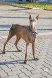 Młody energiczny pies na spacerze obrazy royalty free